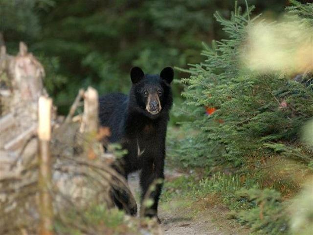 Bear1-retouched-web