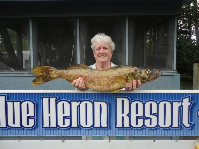 full_blue-heron-resort-32-inch-walleye14390010906893