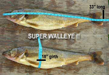 mainwalleye1